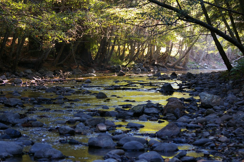 Pfeiffer Big Sur River copyright Levonne Gaddy