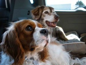 Gingee and Dakota started our fulltime RV journey with us over three years ago.