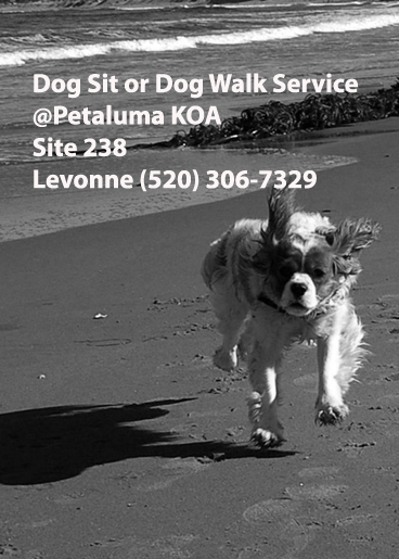 Dog-walking Business Card