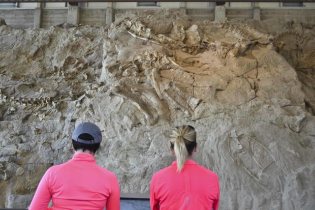 Dinosaur National Mon. Quarry Building DSC_0109