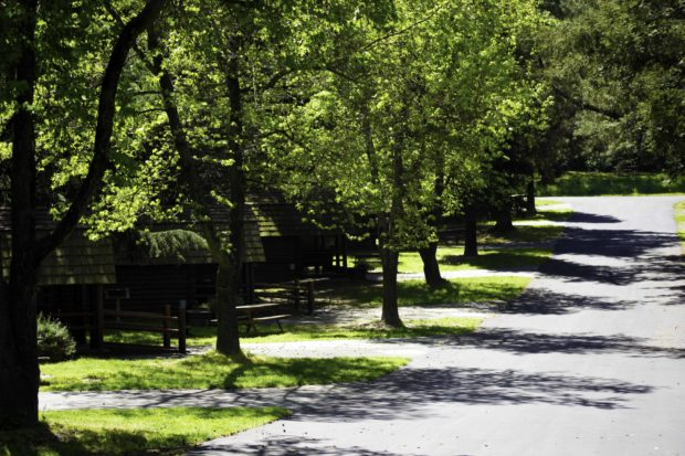 Tree lined lane of cabins at the San Francisco/Petaluma KOA.