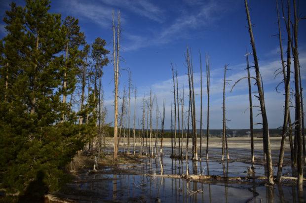 Paint Pot Trees in water 5 DSC_7148